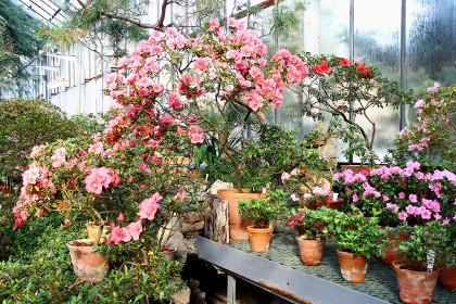 Вересковые оранжереи, №8 в Ботаническом саду Петра Великого в СПб
