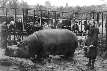 Сотрудницы Ленинградского зоопарка И.Е. Дашина и бегемот Красавица, 1943 год