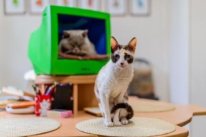 Жители Музея Кошки во Всеволожске