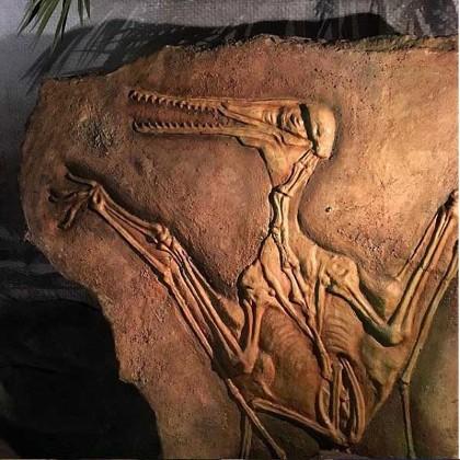 """Макет ископаемых останков птерозавра в """"Планете динозавров"""""""