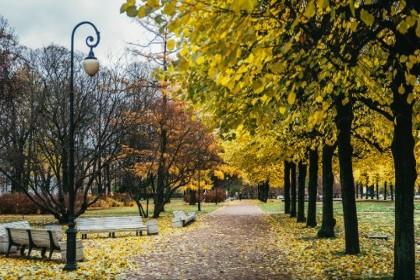 Аллея в Смольном саду в СПб