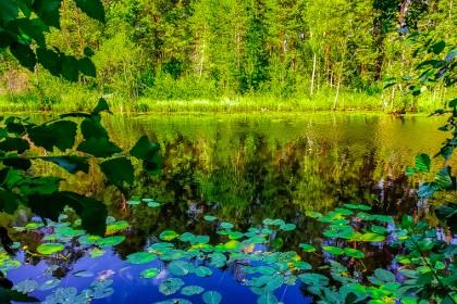 Парк в Сосновом Бору Ленинградская область