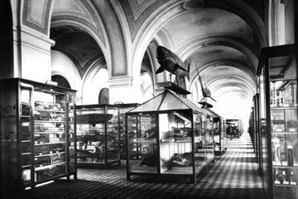 Экспозиция Зоологического музея в 1901 г.